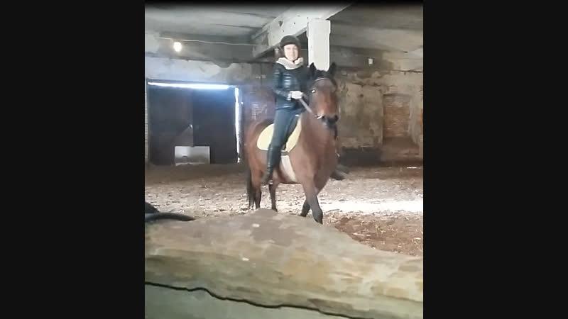 Щеглово клуб Рыжий Конь