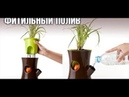 Фитильный полив орхидей. Пересадка. Результаты