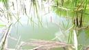 ЭТА РЫБАЛКА НЕЗАБЫВАЕМА Ловля карася на поплавочную удочку крупным планом. Лето 2018