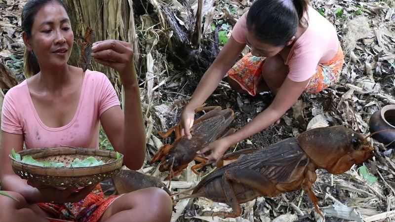 Survival skills Find catch insects fried on clay for food Cooking insects eating delicious 11
