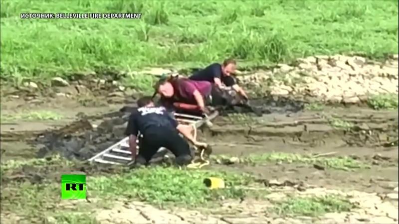 Пожарные вытащили из болота мужчину, который спасал своего попугая