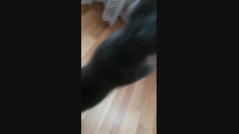 кошка Варя 2 и демонические глаза в конце ролика!