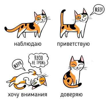 t1LhY3kAJCc - О чем говорит говорит поведение кота)