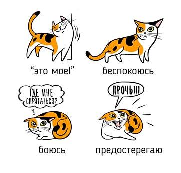 BhpUulCJIc8 - О чем говорит говорит поведение кота)