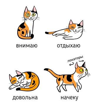 79Fs0pmQdfk - О чем говорит говорит поведение кота)