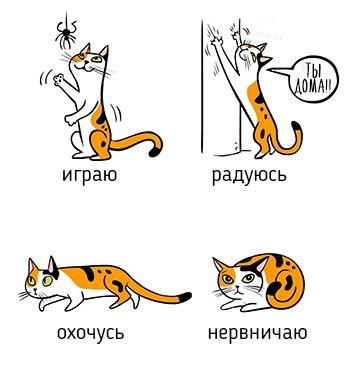 FEwFzoIvdrg - О чем говорит говорит поведение кота)