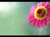 Нани Брегвадзе - _Этот цветок не ярок_