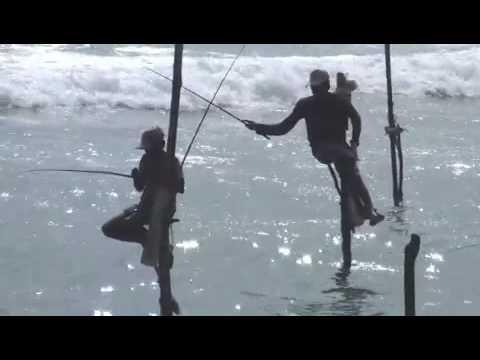 Необычная рыбалка на о. Шри-Ланка. 27 июня - Всемирный день рыболовства. Stilt fisherman catches a big one! Sri Lanka