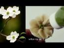 Цветок Кизила. Кондитерские насадки № 104,2,352