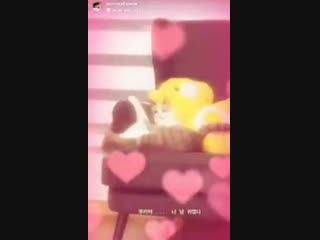 jennie updated her ig story with lisa's cat