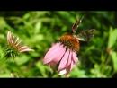 Труженицы бабочки радуются солнечному летнему денечку Всем друзьям желаю наслаждаться как можно дольше летним отдыхом