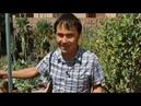 Джон Колер веган сыроед 23 года Мужчина без возраста питается сырой зеленью со своего двора