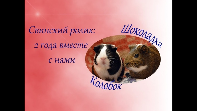 МОРСКИЕ СВИНКИ 2 ГОДА В СТАЕ