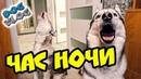 НИКОГДА НЕ СТАВЬ БУДИЛЬНИК НА ЧАС НОЧИ Хаски Бандит Говорящая собака