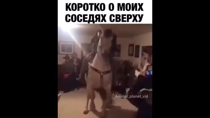 Animal_planet_vid_video_1557672795044.mp4