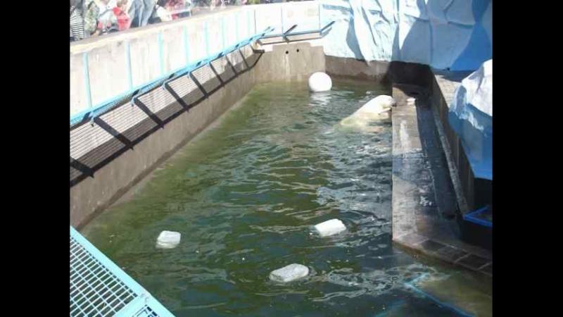 Кай ловит в воде 18 сент