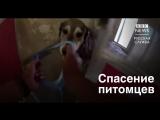 Спасение собак от огня