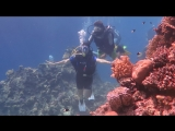 Плаваю с аквалангом в Красном море Шармаль Шейха