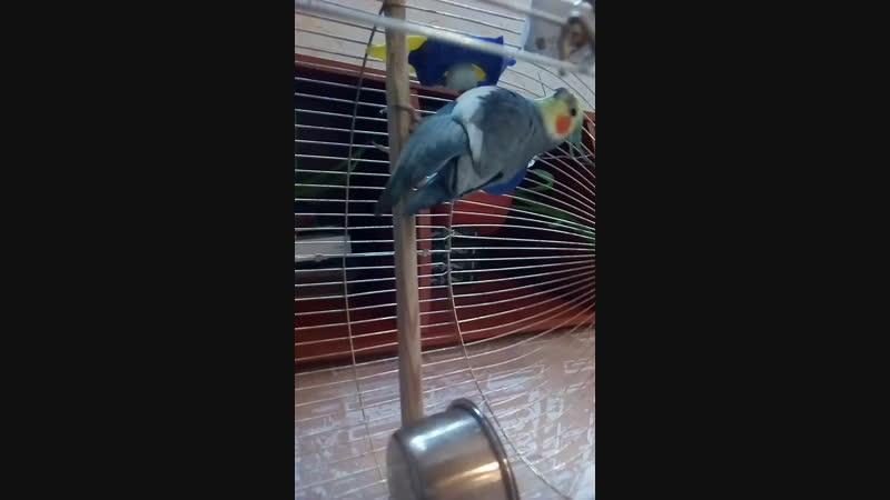 Попуга Фредди Live