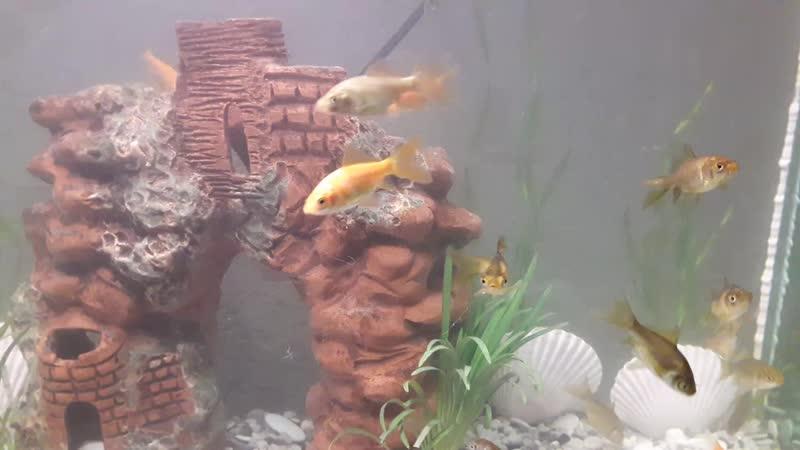 вот выпустили на свою голову в водоем на даче пару рыб из аквариума... вот что к осени получилось)Без названия