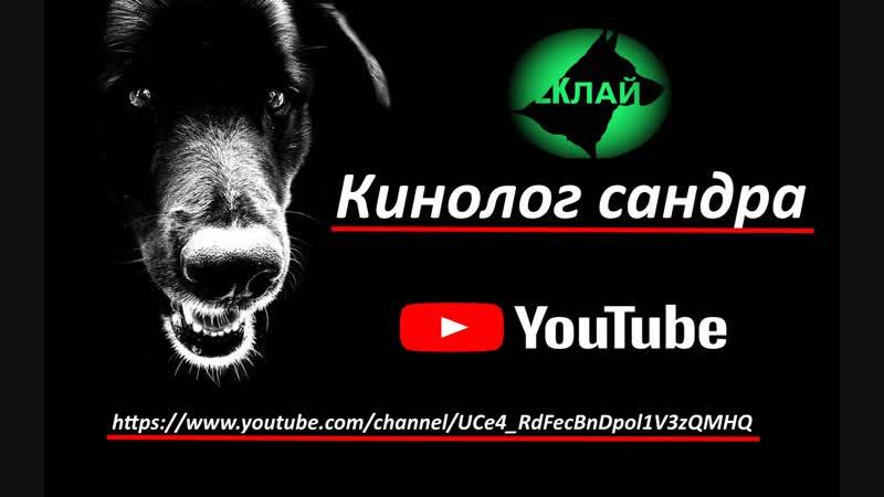 2КЛлай- Кинолог сандра YouTube