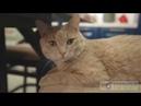 Видеоотзыв героев «Квартирного Вопроса» о компании «Кухонный Двор»
