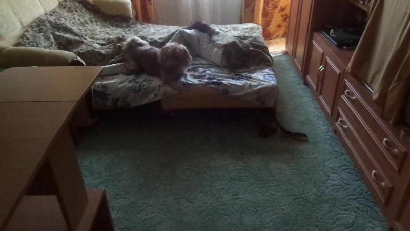 Чуба и Лёка играют. Ай-ай-ай, во что превратилась наша постель!