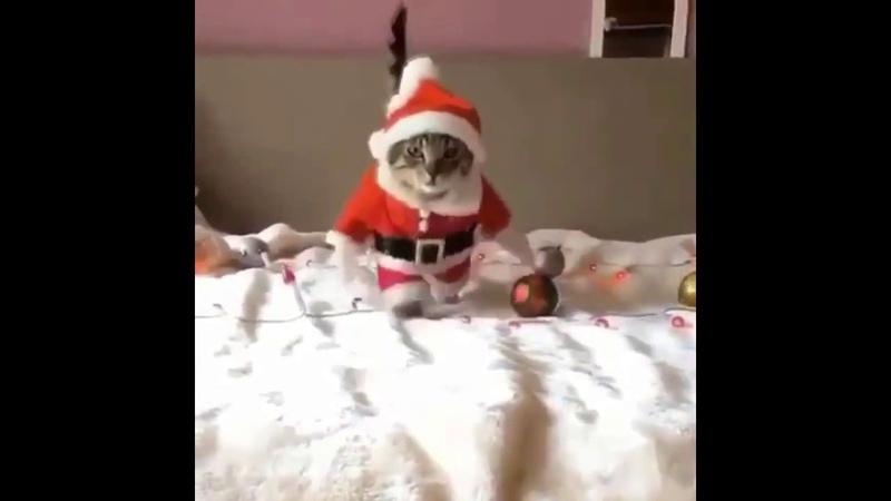 Кот Дед Мороз