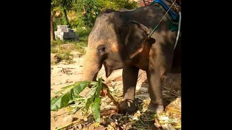 Слоновья ферма на острове Панган