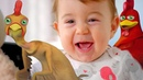 Very Funny Baby Song And Rooster Song - Gorgeous Baby And Child Songs On Minik Tv