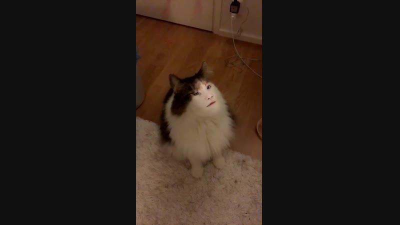 ً - I PUT YOONGI'S FACE ON MY CAT I WISH I COULD BREATHEHEJE