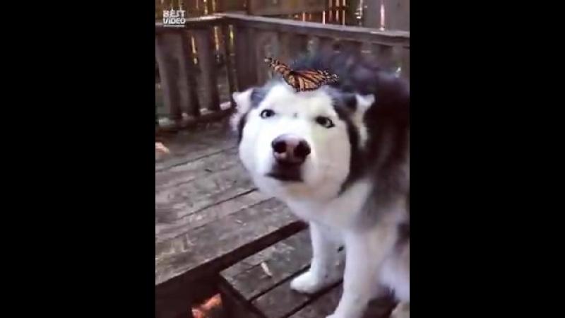 Трогательная реакция на бабочку......