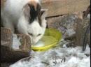 Уже не первый год Ярсалинская школьница пытается решить проблему бездомных животных