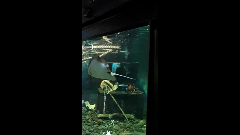 Утришский океанариум