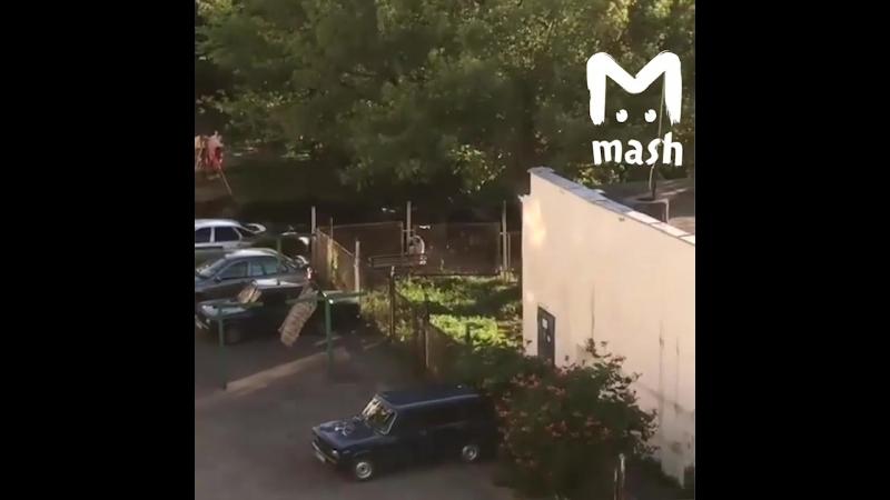 В спальном районе Кисловодска по дворам и детским площадкам проскакал табун лошадей