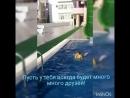 VID_31151117_211945_058.mp4