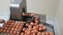 Vacuum egg breaker Rz 0 OVO TECH Poland