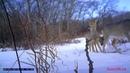 Фотоловушки в Кинделинском охотхозяйстве