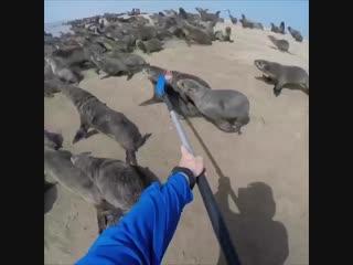 Спасли морского котика от сетки