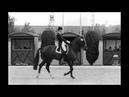 ORGASMUS AUF DEM PFERDESATTEL Pferd tötet Frau