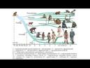 Эволюция и передача навыков (рассказывает профессор Вячеслав Дубынин)