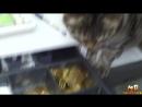 Смешные кошки Выпуск 3 Приколы