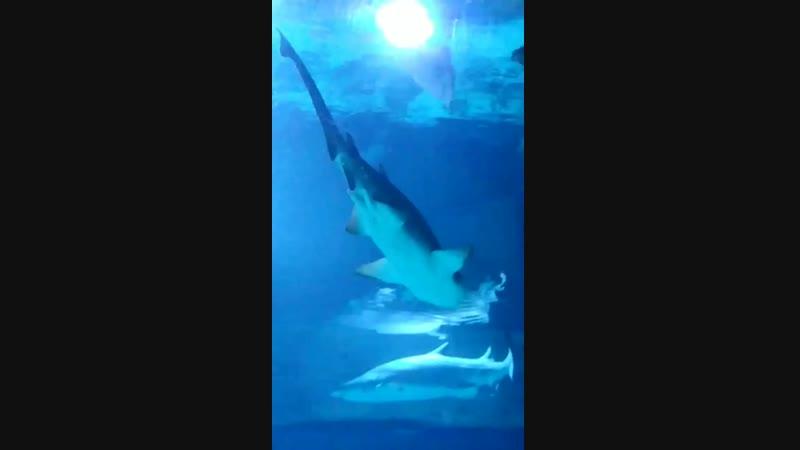 Москвариум. Акулы