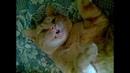 Когда хозяин умер кот от горя окаменел История преданности верного кота