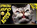 Смешные коты и кошки, приколы про котов с озвучкой - Видео про котов 2019 Funny Cats