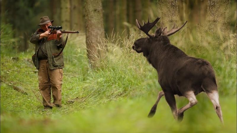 Отличная Охота на Лося 2018 Best of Moose Hunting 2018