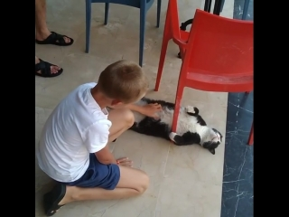 То чувство, когда у кота ультра все включено....