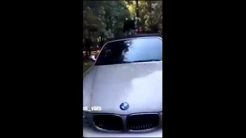 Video-811749a02b410d306110883093cbcb78-V.mp4