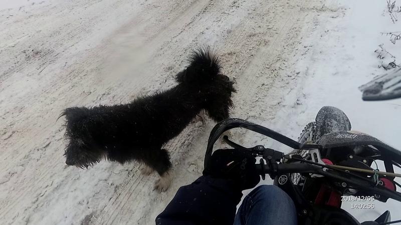 Питбайк ttr 125 и злая собака