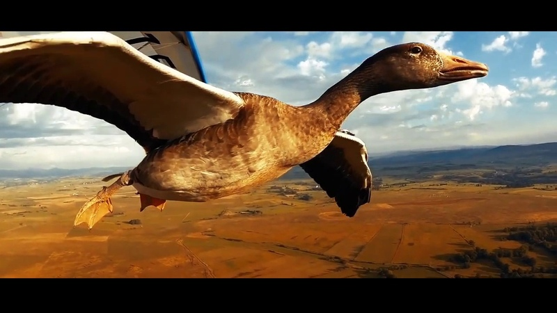 ● GoPro Беларусь: Летать с птицами ●